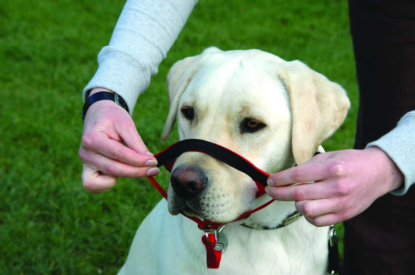 Company Of Animals Halti Headcollar Size 0 Black Pulling