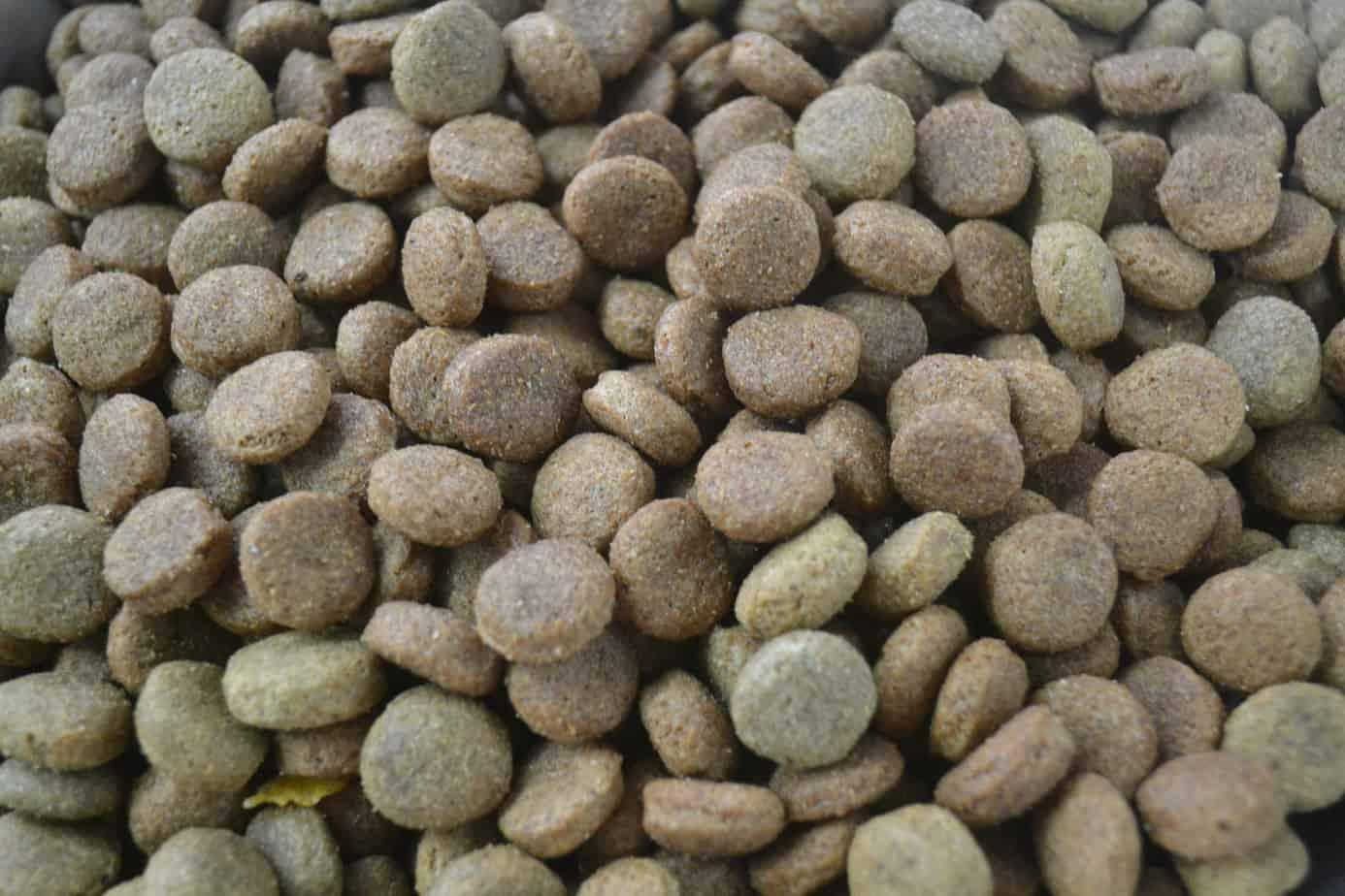 Trusty Dry Dog Food